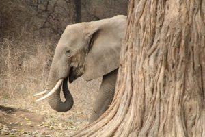 2017 Reisehighlights von Reisebloggern Simbabwe